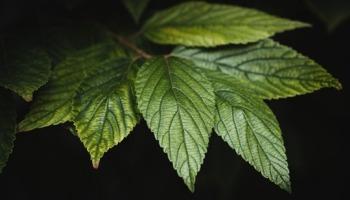 Onde está na Bíblia: Não cai uma folha da árvore se Deus não deixar?